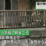東京都大田区仲池上の川沿いで焼けた猫の死骸見つかる 警視庁が動物愛護法違反の疑いで捜査