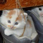 日本の猫は喋るらしい