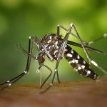 蚊を絶滅させる論文が発表されたらしい