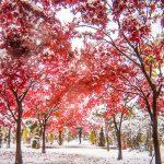 北海道の紅葉と雪のコラボが美しい