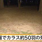【事件】公園にカラス50羽の死骸=毒入りパン食べ? ―東京・練馬