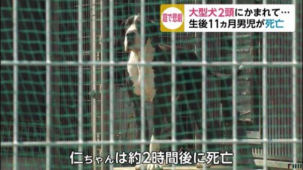 飼っている大型犬2匹にかまれ11ヶ月男児死亡