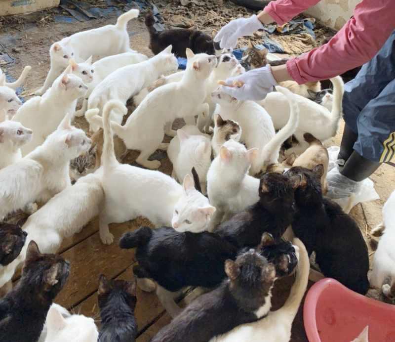 札幌市の一軒家で猫238匹保護 多頭飼育崩壊か