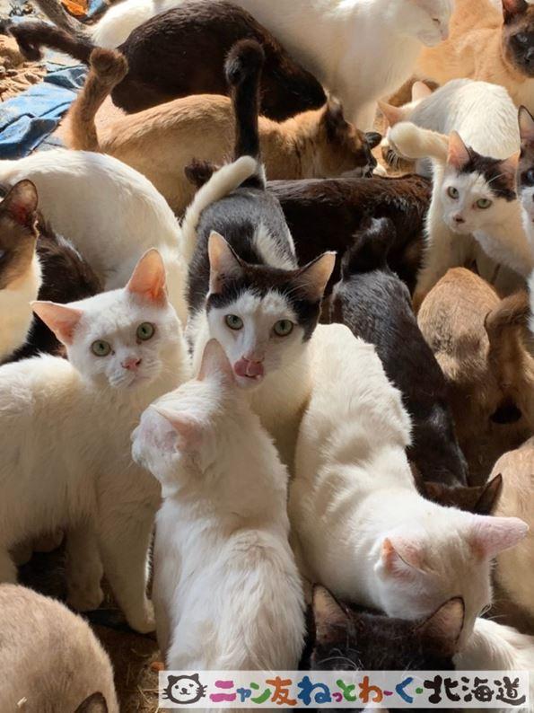 猫を保護した「ニャン友ねっとわーく北海道」