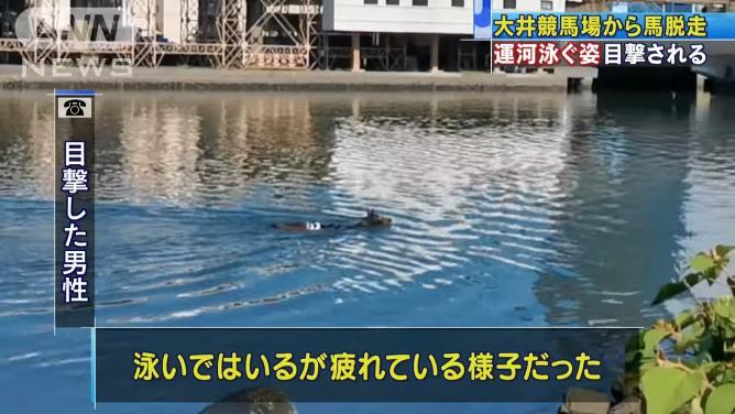 目撃者「泳いでいるんだけと疲れている様子だった」