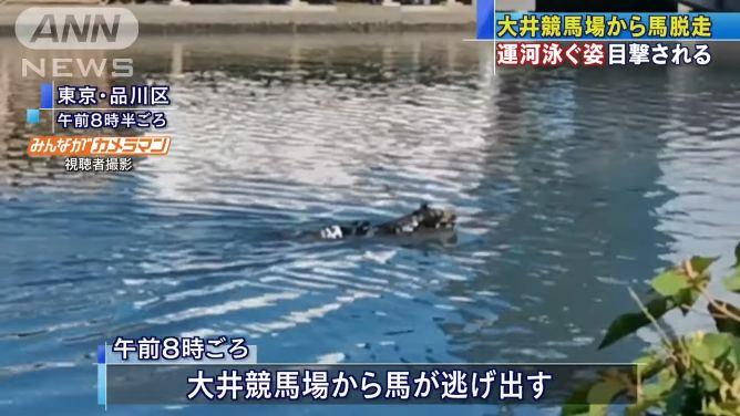 大井競馬場から馬が脱走 京浜運河を泳ぐ 馬は捕まり大井競馬場に戻される