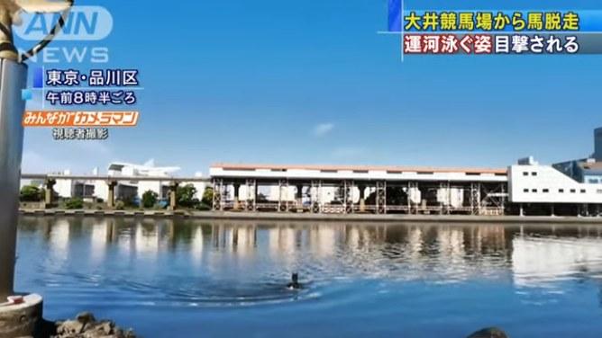 現場は大井競馬場前の京浜運河