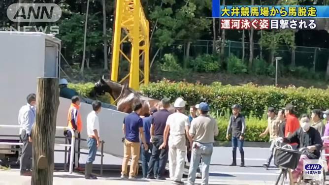馬は捕まり大井競馬場に戻される