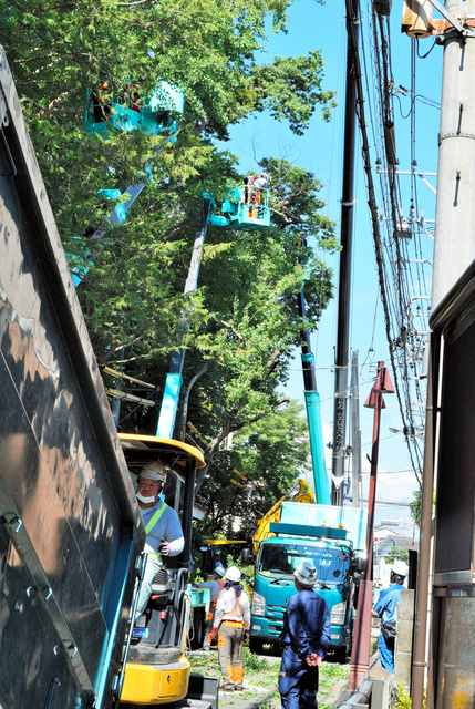 東京都八王子市の神社「天満社」の「ご神木」を行政代執行で伐採 伐採費用は約1250万円3