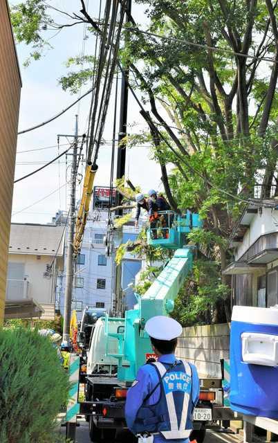 東京都八王子市の神社「天満社」の「ご神木」を行政代執行で伐採 伐採費用は約1250万円5