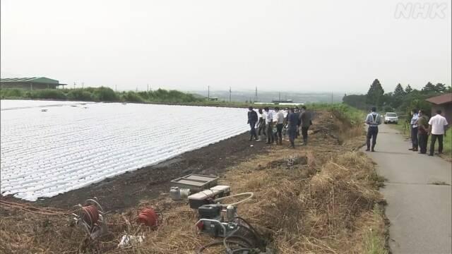 現場は長野県小諸市柏木のレタス畑