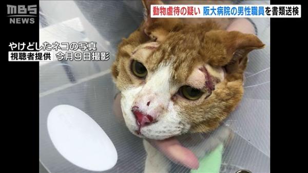 阪大病院の臨床検査技師が飼い猫にアルコールをかけ火を付け書類送検 「ストレスでやった」