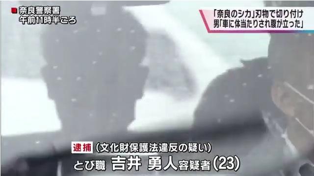 吉井勇人容疑者を逮捕 天然記念物の「奈良のシカ」を斧で切りつけ死なせる 「車に体当たりされ腹が立った」