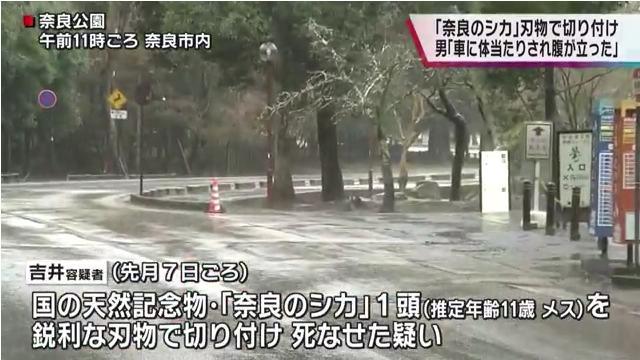 現場は奈良公園