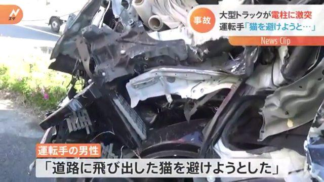 トラックの運転手「道路に飛び出した猫を避けようとした」