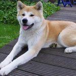 【ペット】飼い犬にかまれ女性死亡=3歳雄の秋田犬―北海道