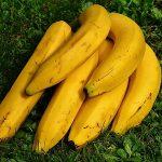 食卓からバナナが消えるかもしれんらしい