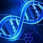 「リベラル」か「保守」かは遺伝子で決まるらしい
