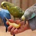 【感染症】鳥のふんなどを吸い込むことで感染する「オウム病」、妊婦で日本初の死亡例
