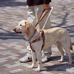 【障害者差別解消法】「犬は絶対ダメ」盲導犬利用者の6割が入店拒否など「差別」を経験