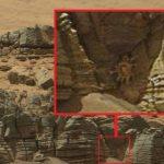 火星でカニのような生物?が発見されたらしい