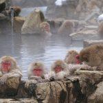 飼育のサル57頭を駆除 千葉の動物園、交雑種と判明で